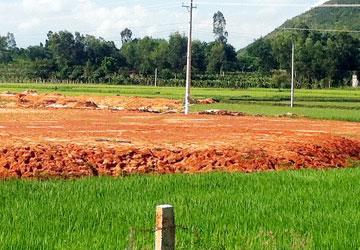 Tuy chỉ xin chuyển sang đất kinh doanh hơn 8.000 m2 nhưng hiện tại khu đất trồng lúa rộng hơn 30.000 m2 này đã được san lấp gần như toàn bộ.