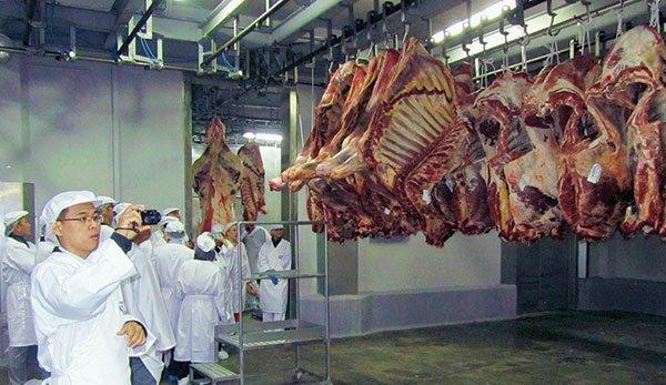 Bò Úc, heo châu Âu và nỗi buồn ngành chăn nuôi trong nước