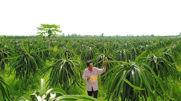 Sẽ xử lý nghiêm vụ thâu tóm đất rừng U Minh Hạ