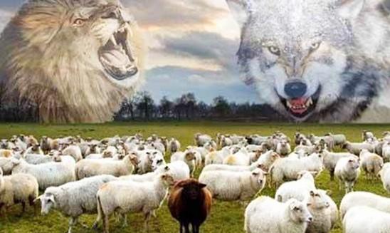 Đời Chứng khoán: Lên voi xuống…