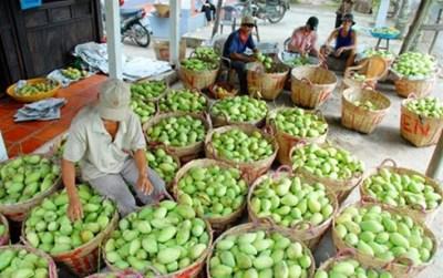 """Xuất khẩu trái cây lần đầu """"vượt mặt"""" xuất khẩu gạo"""