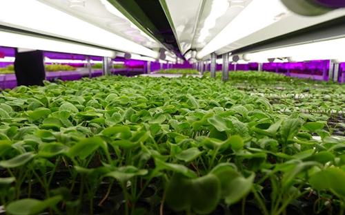 Gói 100,000 tỷ đồng cho nông nghiệp sẽ có lãi suất thấp hơn từ 0.5-1.5%
