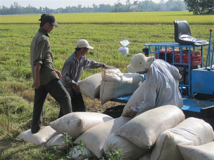 FAO dự báo năm 2017 Việt Nam đạt 43,5 triệu tấn lúa