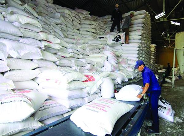 """Vùng nguyên liệu """"trói"""" hạt gạo xuất khẩu"""