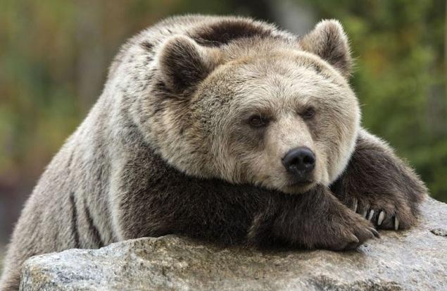 Phần lớn cổ phiếu toàn cầu đều rơi vào phạm vi thị trường con gấu