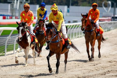 Làn sóng rót trăm triệu đô mở trường đua ngựa | DAS