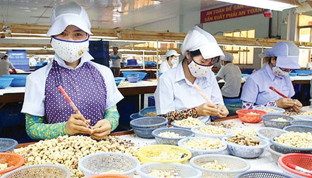 Vì sao xuất khẩu nhân điều liên tục sụt giảm?