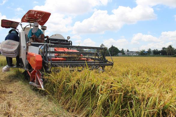 Xuất khẩu gạo vào EU có thể tăng gấp 4 lần - Ảnh 2.