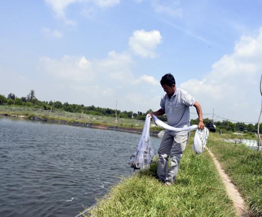 Giá tôm bất ngờ tăng vọt, nhiều nông dân nuôi tôm trúng lớn hình ảnh 2