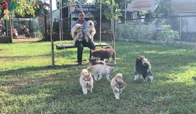 Chán chật vật tìm việc ở phố, kỹ sư về quê nuôi chó kiểng làm giàu hình ảnh 2