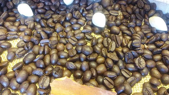 Cà phê lao dốc, nhà nông mất 1 triệu đồng/tấn