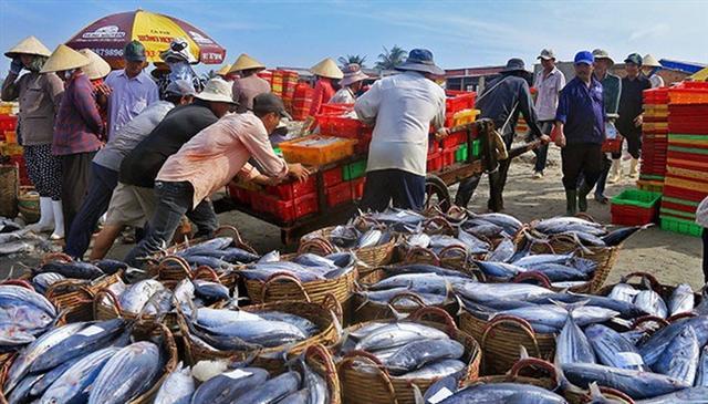 Tiến tới 'cấm biển' vì hải sản Việt Nam đang cạn kiệt