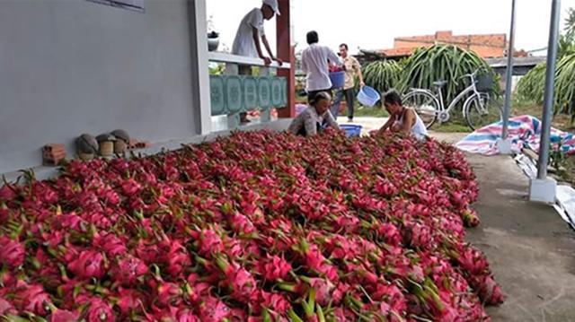 Công nghệ chế biến lạc hậu, giá trị nông sản có ngành hàng thấp hơn thế giới 50%
