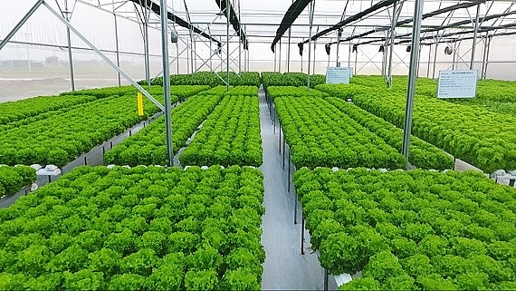 Hanoi offers good opportunities for high-tech agriculture for investors