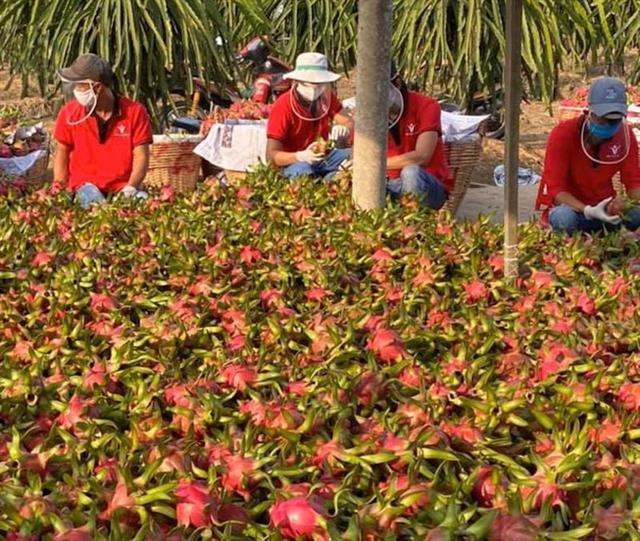 Thái Lan tăng mạnh nhập khẩu trái cây Việt Nam