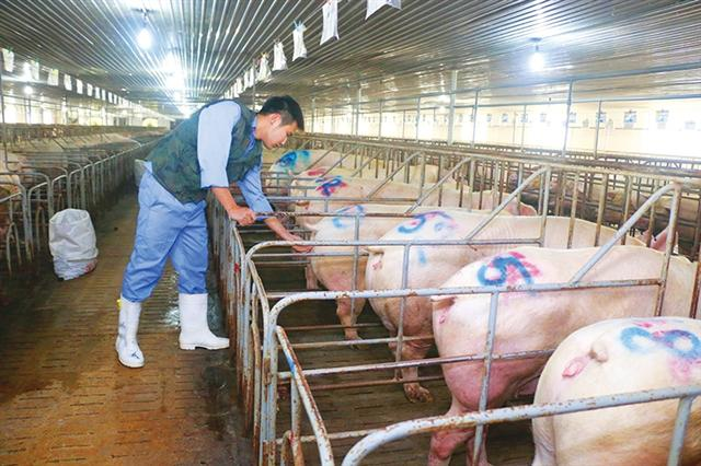 Sky-high livestock prices may breach competition law
