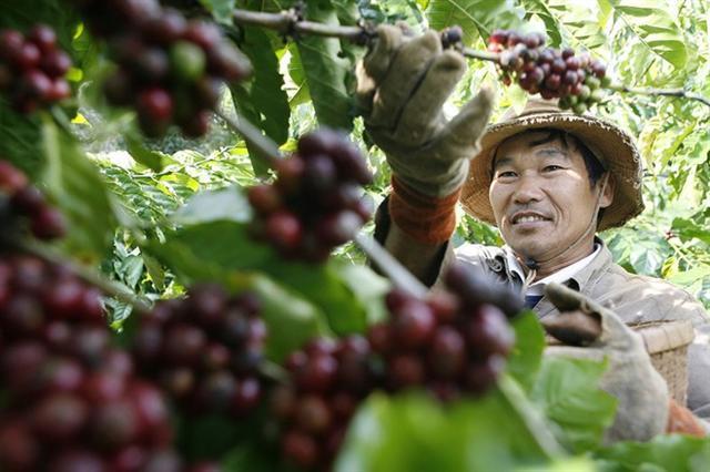 Để tăng trưởng giá trị nông sản Việt